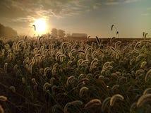 Le lever de soleil de chute illuminent la générosité de récolte images stock