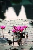 Le lever de soleil dans Angkor Vat, Cambodge Photo stock