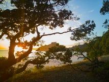 Le lever de soleil par des arbres de Pohutukawa, de nouveaux copains échouent Photo libre de droits