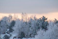 Le lever de soleil rougeoie derrière les arbres congelés par arbres Photographie stock libre de droits