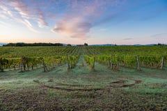 Le lever de soleil sur le champ dans la ligne ciel de vignoble de vigne de Toscany opacifie le matin image stock