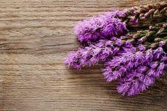 Le Liatris (étoile de flambage ou gayfeather) fleurit sur le backgroun en bois photographie stock