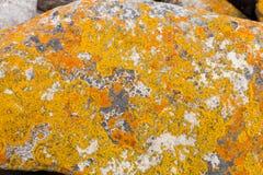 Le lichen a couvert des rochers et des roches sur la côte atlantique du cap images stock