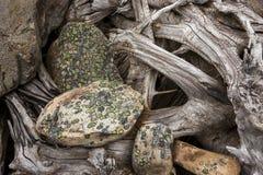 Le lichen a couvert des roches et enracine le résumé Image stock