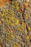 Le lichen de jaune, orange et gris sur une écorce brune d'un arbre Couleurs jaunes, oranges, grises 3 de brun Images stock