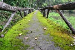 Le lichen sur la voie Photos libres de droits