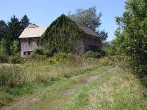 Le lierre a couvert la grange Photos libres de droits