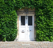 Le lierre a couvert la porte Image libre de droits