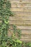 Le lierre a couvert le mur en bois Image libre de droits