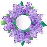 Le lilas fleurit la carte de voeux, invitation Photographie stock libre de droits
