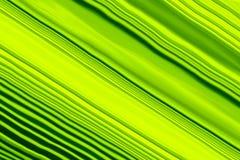 Le linee diagonali verdi dell'estratto strutturano per fondo royalty illustrazione gratis