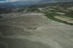 Le linee famose di Nazca nel Perù Dall'aria potete vedere molti generi differenti di figure fotografia stock libera da diritti