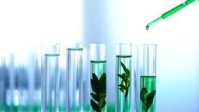 Le liquide vert a versé dedans des tubes de laboratoire avec des usines, élevage génétique, cosmétiques photographie stock libre de droits