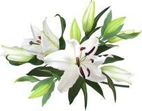 Le lis léger fleurit le groupe sur le fond blanc illustration de vecteur
