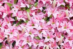 Le lis rose artificiel de pluie fleurit le fond Images libres de droits