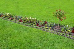 Le lit de fleur de coloré s'abaisse au printemps Fleurs colorées dans le jardin Image stock