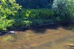 Le lit de la rivière de la rivière de forêt, illuminé par le soleil de ressort Photo libre de droits