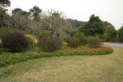 Le lit, la pelouse et les usines de fleur ont arrangé en ressort de montagne de Qingxiu Image libre de droits