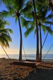 Le lit pend des palmiers avec la corde Image stock