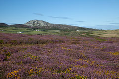 Le littoral d'Anglesey Image libre de droits