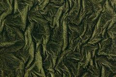 Le Livre vert d'herbe Image libre de droits