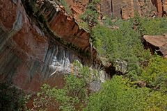 Le long d'Emerald Pools Trail, Zion National Park, Utah, Etats-Unis Images stock