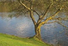 le long de l'arbre de lac Photo libre de droits