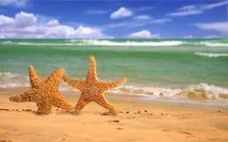 le long du beac appareillez plein d'humour la marche d'étoiles de mer Image libre de droits