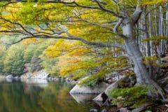 le long du lac Photo stock