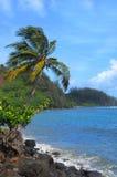 le long du palmier d'Hawaï Kauai de côte Image libre de droits