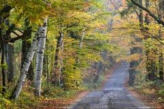 le long du sucre de route de côte d'automne Photo stock