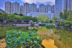 le lotus chez Fanling Hong Lok Park HK Photographie stock libre de droits
