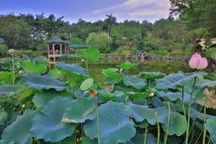 le lotus chez Fanling Hong Lok Park HK Images libres de droits