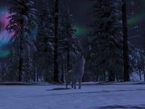 Le loup d'Alaska sauvage de toundra hurle illustration de vecteur