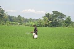 Le lucertole di caccia dei residenti hanno sovvenzionato l'uso del fertilizzante da BULOG Fotografia Stock