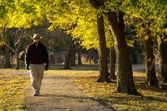 Le mâle adulte supérieur seul marche sous des feuilles d'automne en parc Photographie stock