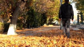 Le mâle marchant sur l'érable tombé orange part en automne Feuilles de jets de mâle avec ses pieds Part de l'appareil-photo clips vidéos