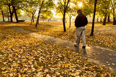 Le mâle supérieur marche pensivement en parc le matin coloré d'automne. photographie stock