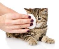 Le médecin vétérinaire essuie des yeux à un chat D'isolement sur le backgr blanc Photos stock