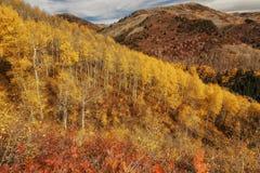 Le mélange de l'automne Photographie stock