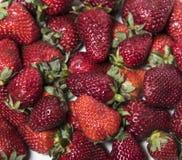 Le mélange des fraises sur le fond blanc Photos libres de droits