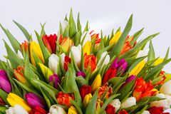 Le mélange des tulipes de ressort fleurit près du mur gris image stock