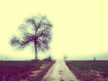 Le même arbre, la même route Photo libre de droits