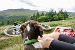 Le maître et son chien sur un vélo se déclenchent Photographie stock libre de droits