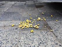 Le maïs éclaté jaune est dispersé sur la route photographie stock