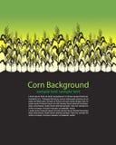 Le maïs égrappe la zone Photo stock