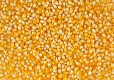 Le maïs Image stock