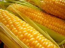 Le maïs Photographie stock libre de droits