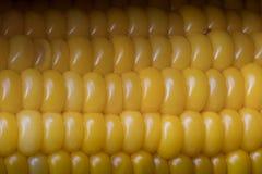 Le maïs de bébé doux jaune était sur la table Images stock