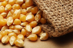 Le maïs de grain dans le petit sac Photos libres de droits